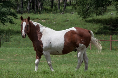 WR Horse - Dale Wood