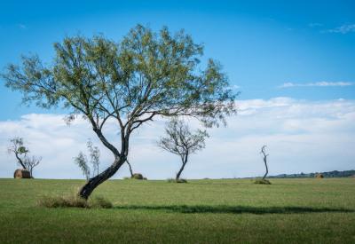 """""""SWAYING TREES"""" Ralph Nordenhold"""