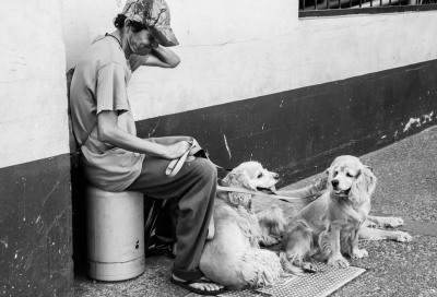 """A Man & His Dogs"" - Sandy Gilbert"