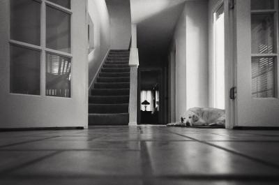 """""""An Old Dog"""" - HollyThompson"""