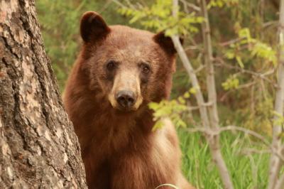 """""""Bear"""" - Steven Touchstone"""