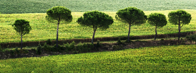 """Green Lines"" - Dennis Deeny"