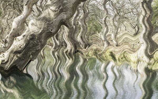 """Wacky Waterscape"" - Sandy Gilbert"