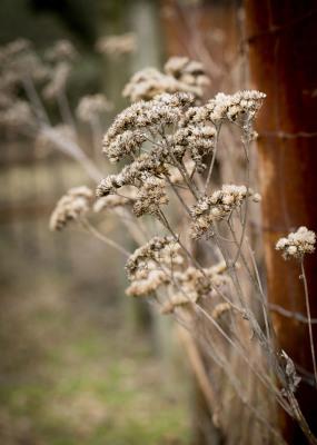 """Winter Wildflowers"" - Sandy Gilbert"