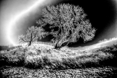 """Tree"" - David Goodge"