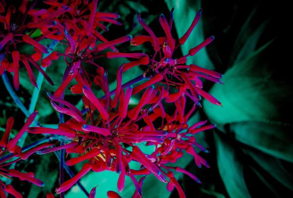 """Cactus Petals"" - David Goodge"