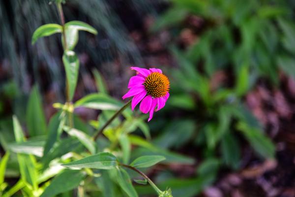 """Flower"" - Homer Gilbert"