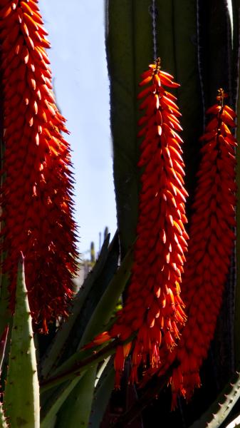 """Flowers"" - Darryl Patrick"