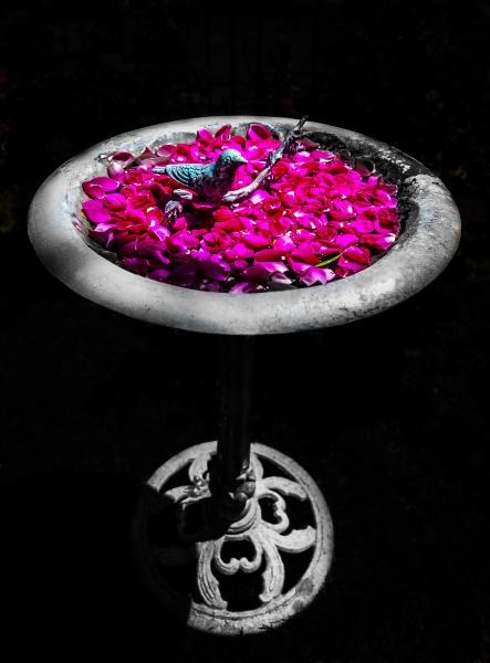 """Rose Bath"" - Bruce Williams"