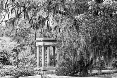 """Bonadventure Cemetery, Savannah"" - Sandy Gilbert"