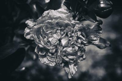 """Petals"" - Darryl Patrick"