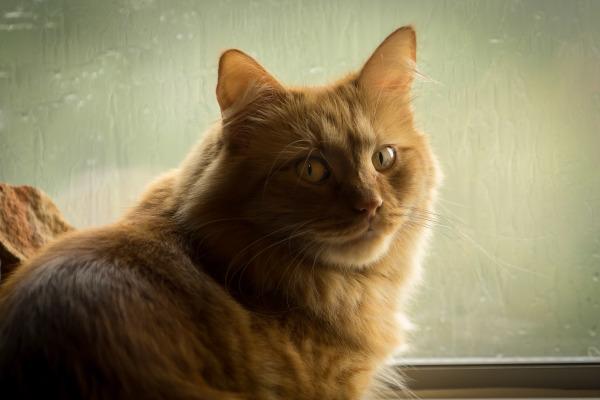 """Pretty Kitty"" - Ralph Nordenhold"
