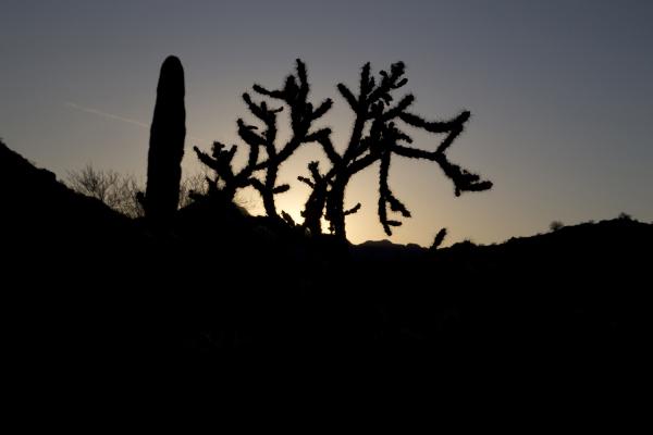 """""""Dancing Cactus"""" - Darryl Patrick"""