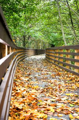 """Fallen Leaves"" - David Goodge"