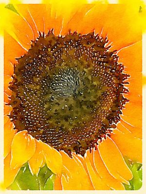 """""""Sunflower"""" - Sandy Gilbert"""