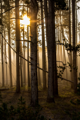 """""""Forest Sunrise"""" - Colby Kloehr"""