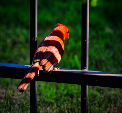 """Jail Bird"" - Bruce Williams"