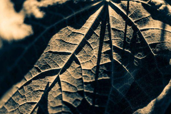 """""""Leafy Veins"""" - Allen Skiles"""