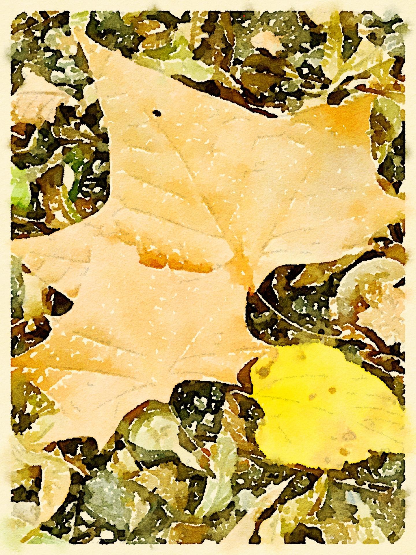 """""""Autumn's Treasure"""" - Sandy Gilbert"""