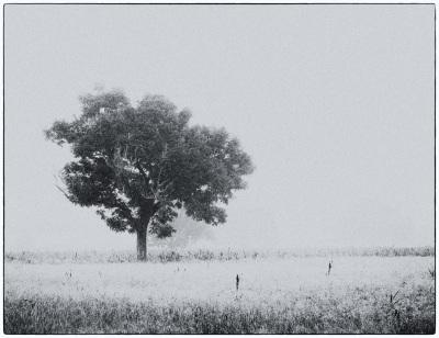 """Isolation"" - Sandy Gilbert"