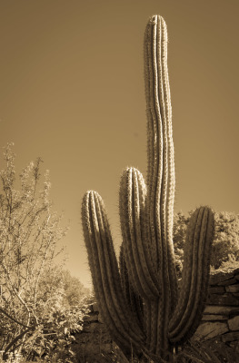 """Cactus"" - Ralph Nordenhold"