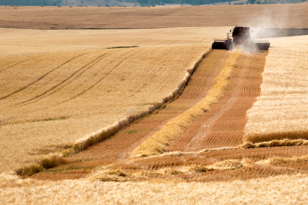 """""""Harvest Trails"""" by Colby Kloehr"""