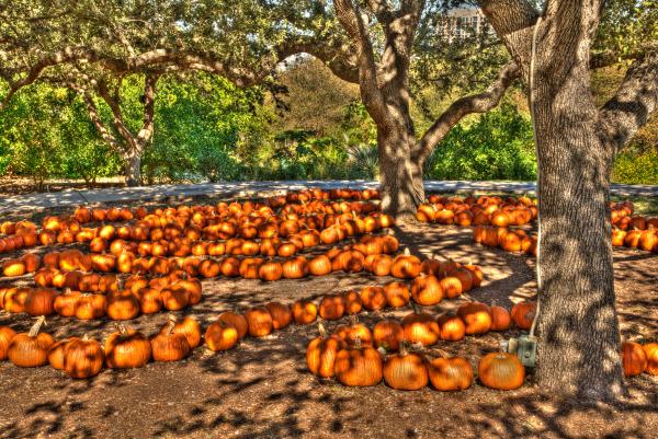 """Halloween Harvest"" by Homer Gilbert"