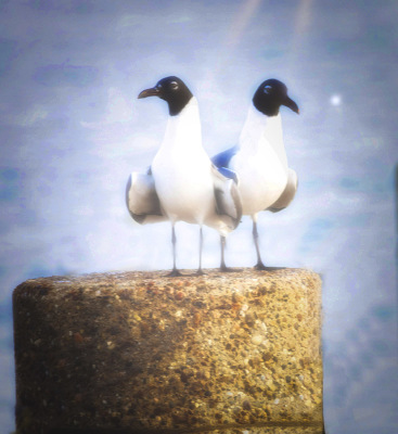 Sea Gulls by Dennis Deeny