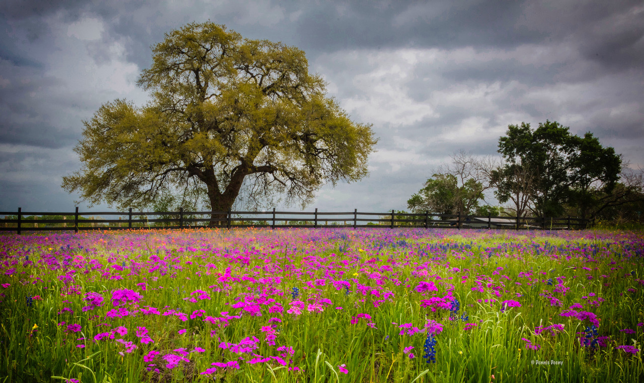 Springtime by Dennis Deeny