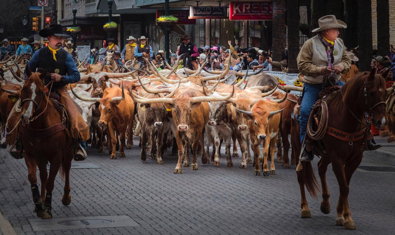 Houston Street Cattle Drive by Dennis Deeny