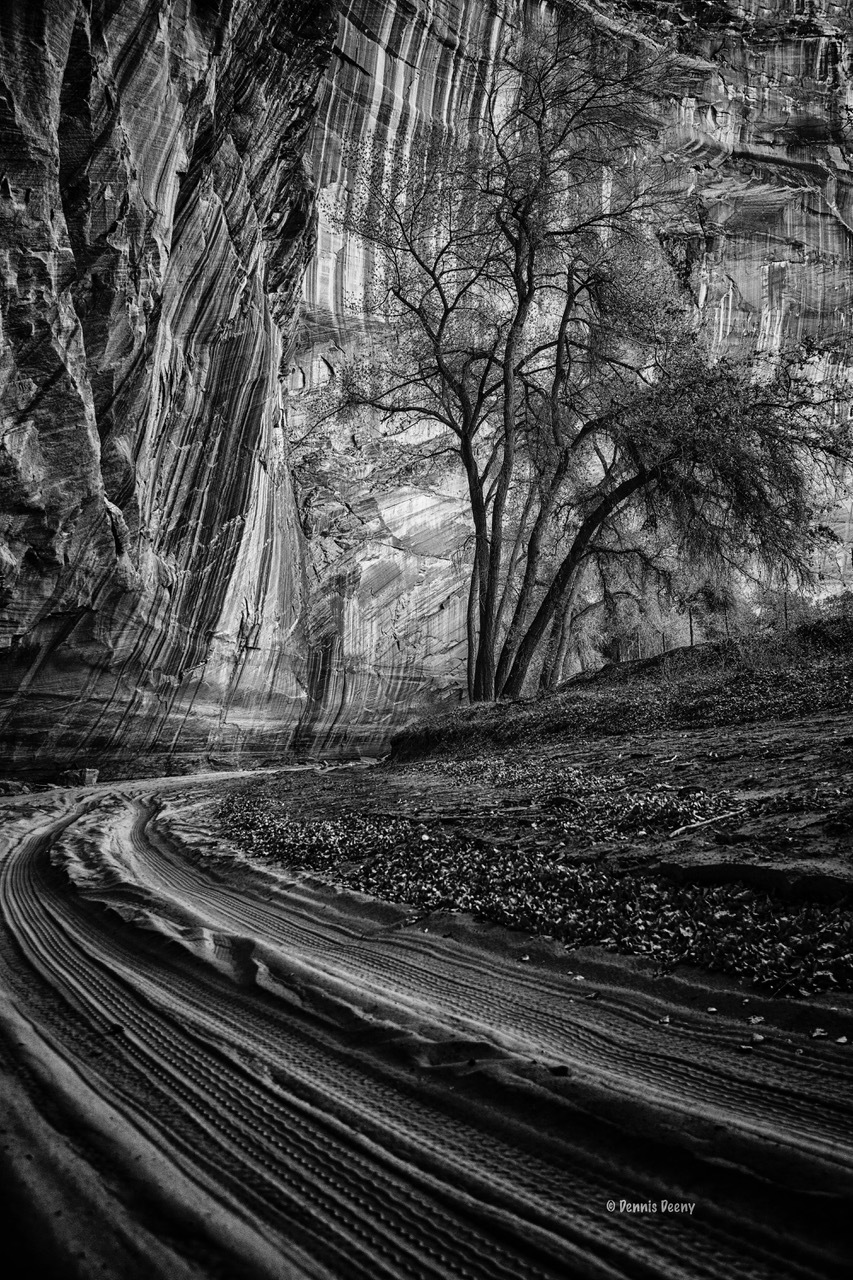 Canyon View by Dennis Deeny