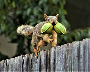 I Got the Nuts by Debbie Alvarado