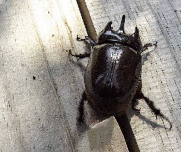 Bug by Homer Gilbert