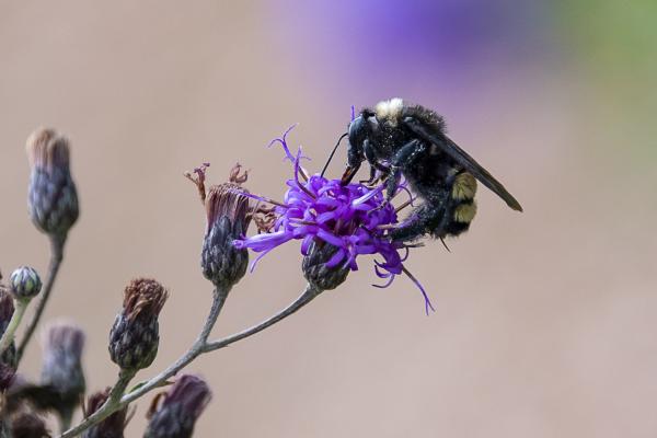 The Great Pollinator by Barbara Beversdorf