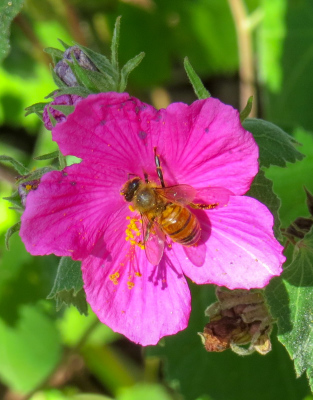 Color to Bee by Donna Rice