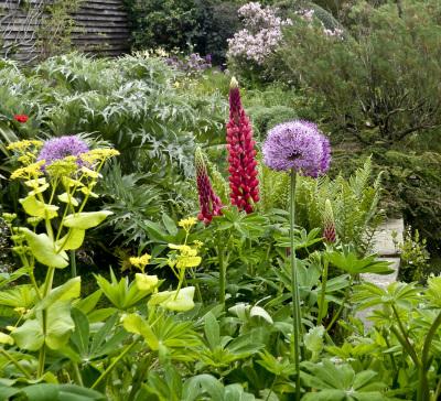 An English Garden by Sharon Deeny