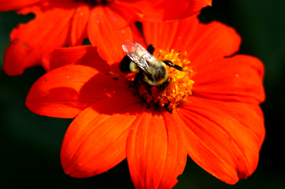 """""""Fall Bee"""" by Melissa Onks"""