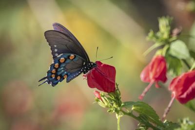 """""""Sweet Sweet Nectar"""" by Barbara Beversdorf"""