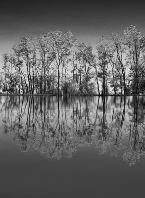 """""""Reflections in Black and White"""" by Sandy Gilbert"""