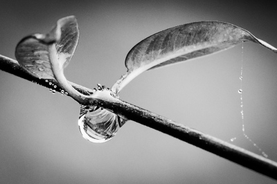 """""""Water Drop"""" by Ralph Nordenhold"""