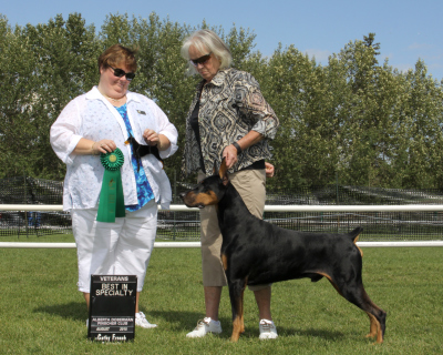Best Veteran in Specialty Show, 2015 Alberta Doberman Specialty Show