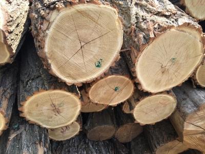 Robinia logs