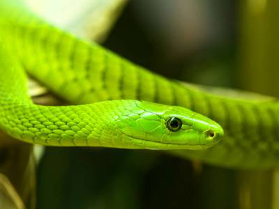 Snake and Animal Park