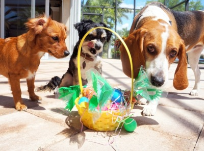 Easter Treats and Tricks