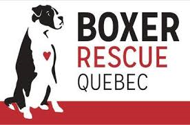 Boxer Rescue Quebec