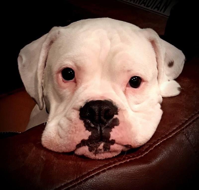 Doggie Tear Stains