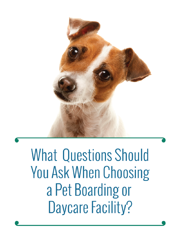 Questions to ask a Boarding facility