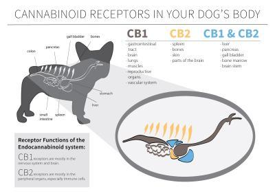 CBD Oil For Pet Health