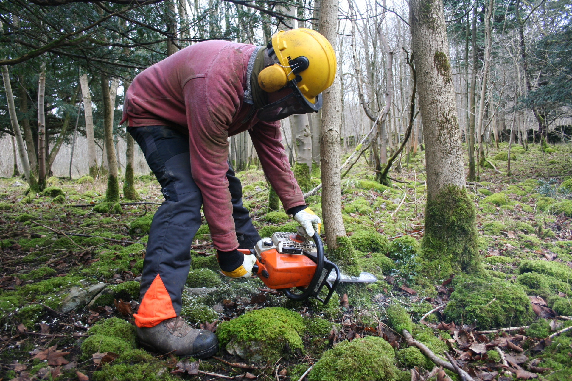 How to use local wood  Saturday 25th March and 7th Oct 2017