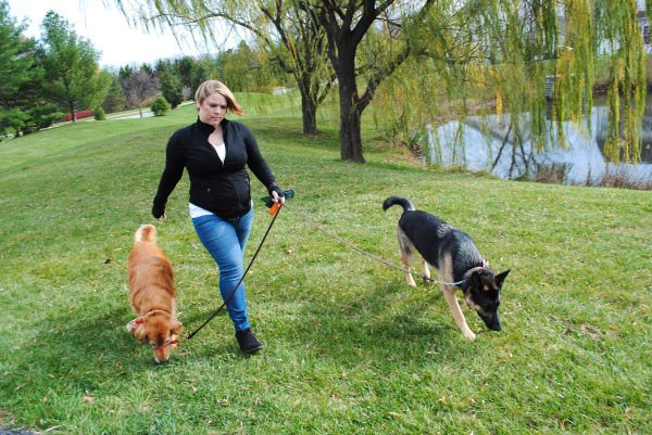 Frequent Dog Walking Promotion